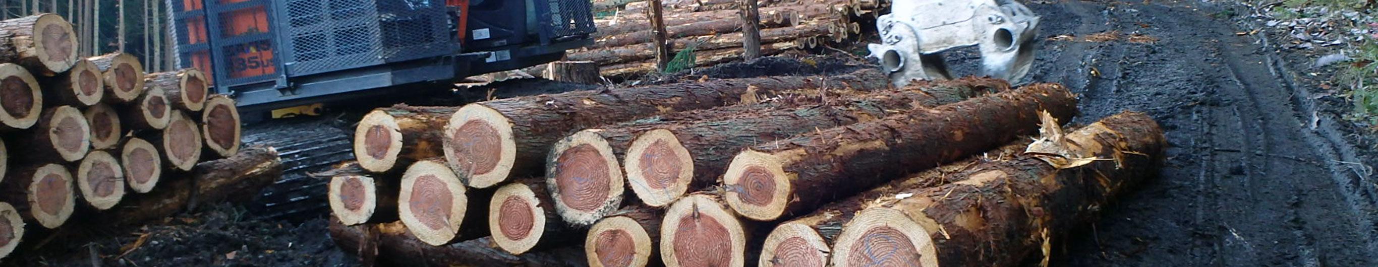 秋田での林産事業