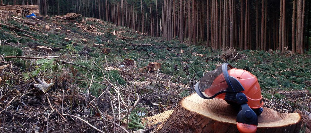 秋田での山林管理